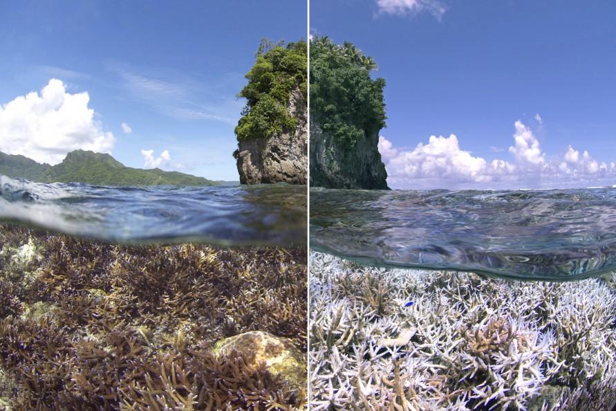XL-Catlin-Seaview-Survey-American-Samoa-5-1