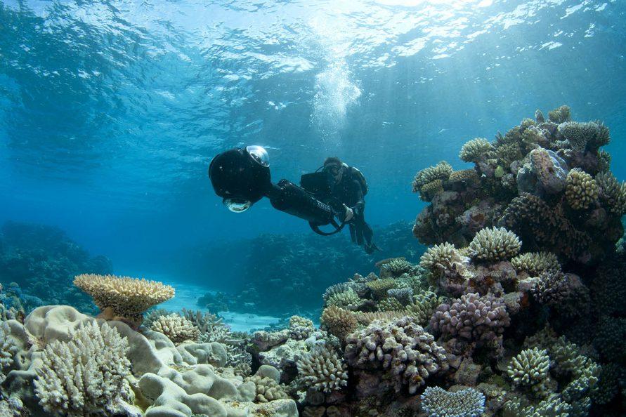 google seaview coral triangle